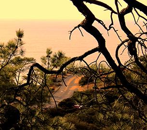 Torrey Pines Natural Preserve in La Jolla